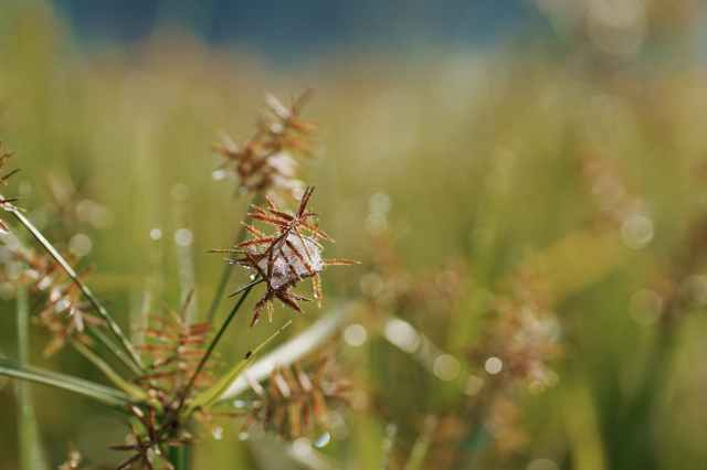 brown grass in tilt shift lens