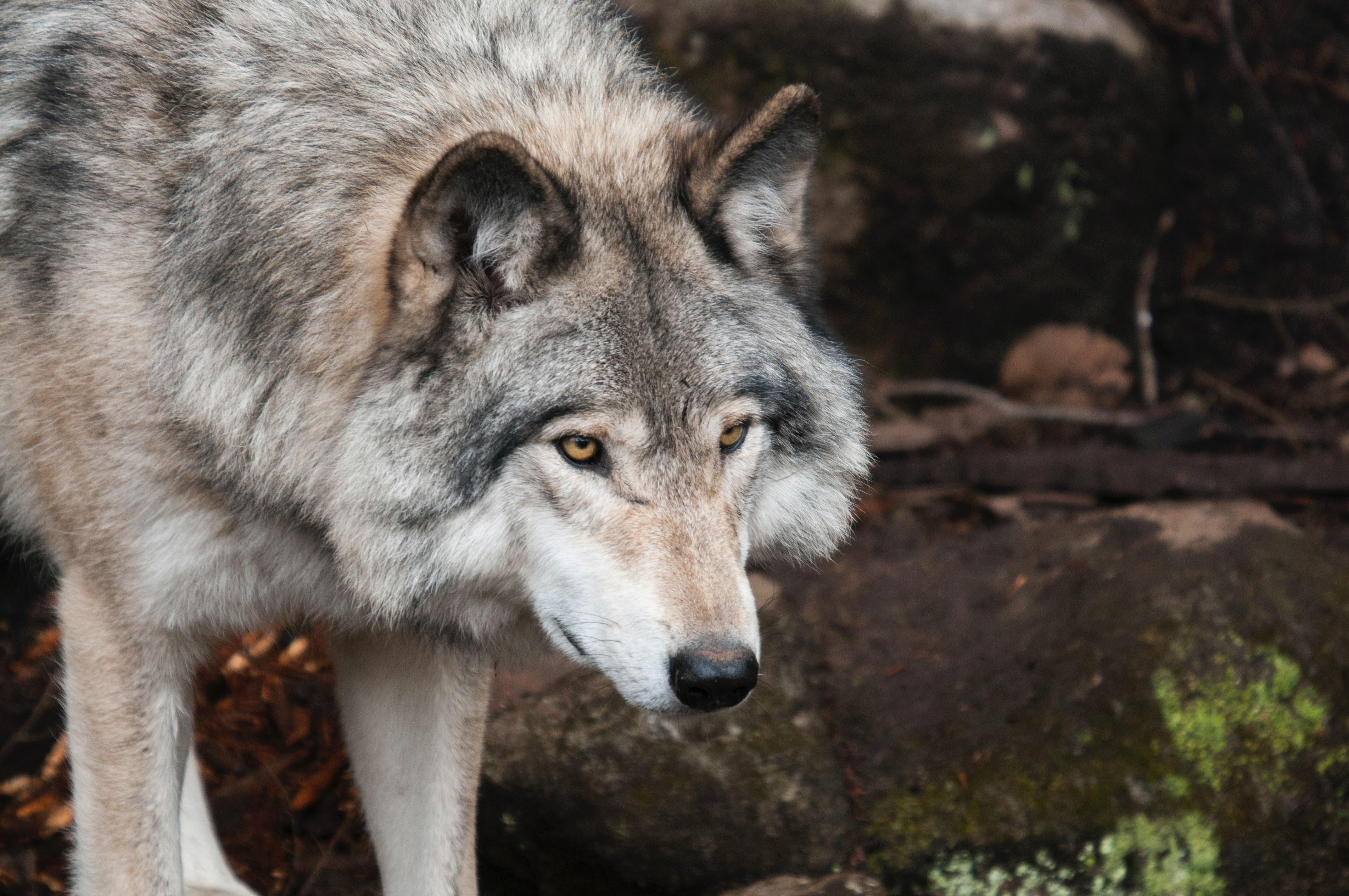 animal-animal-photography-blur-canine-397863
